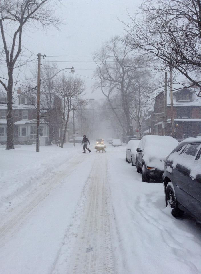 Free Things To Do Winter In Toronto
